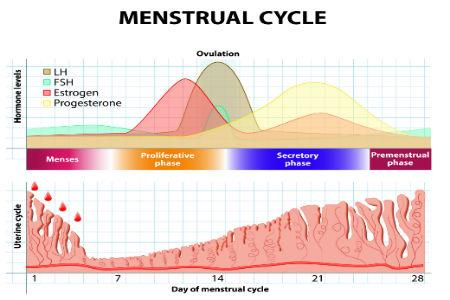 Trastorno de la menstruación