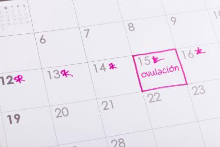 Método del ritmo para saber cuando se ovula